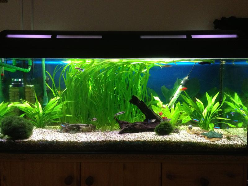 baumarkt r hren suche letzt infos evtl bilder aquarium forum. Black Bedroom Furniture Sets. Home Design Ideas