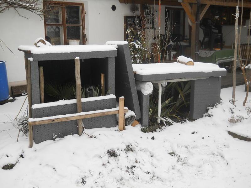schneepalme seite 1 winterharte palmen. Black Bedroom Furniture Sets. Home Design Ideas