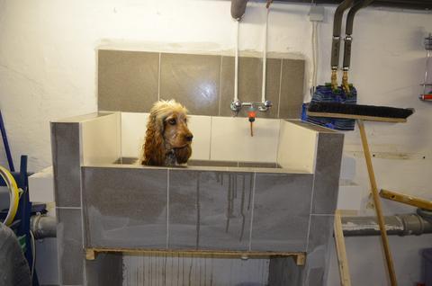 hundebadewanne booster bath abdeckung ablauf dusche. Black Bedroom Furniture Sets. Home Design Ideas