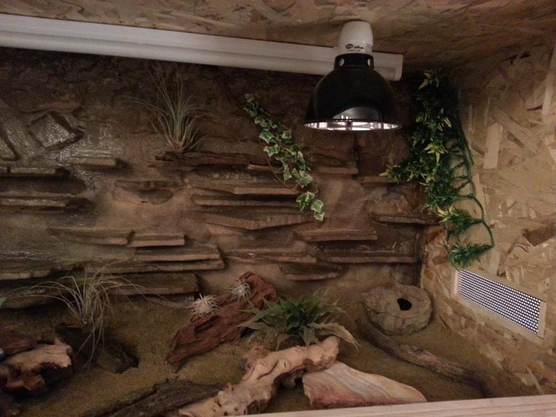 die artgerechte haltung von leopardgeckos eublepharis macularius. Black Bedroom Furniture Sets. Home Design Ideas