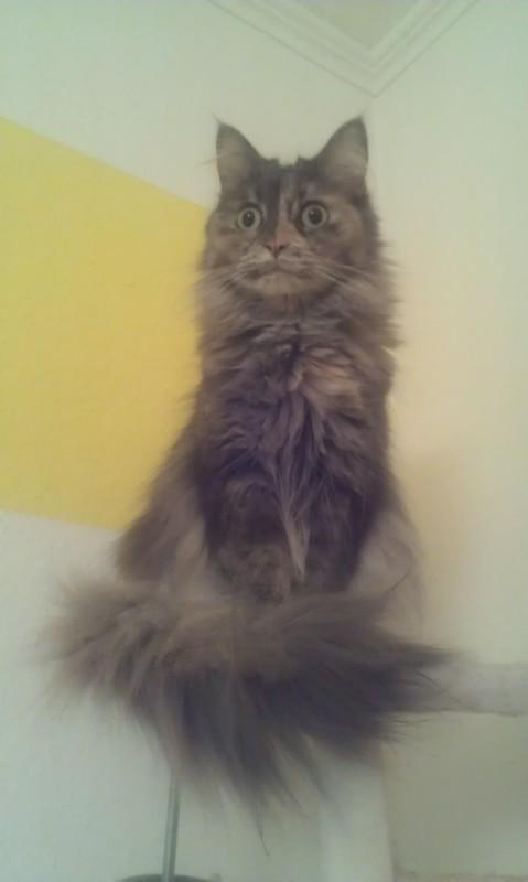 CatwalkKratzwand fertig  Katzen Forum