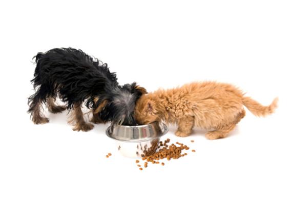 Кошка ест собачий корм