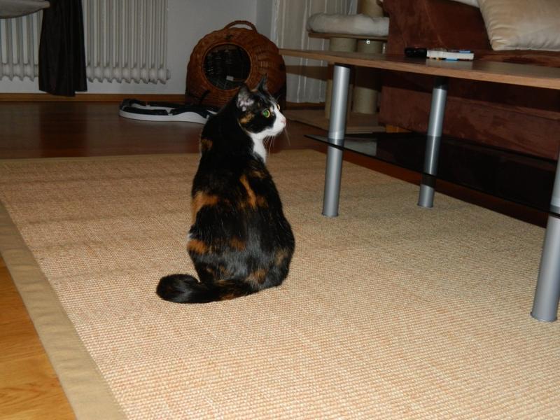Katzen Forum  Der Teppich und die Lähmung )