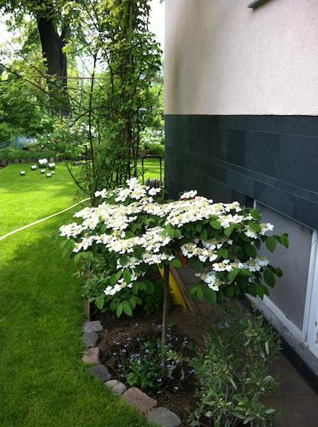 vorgarten gestalten welche pflanzen wie anordnen mein sch ner garten forum. Black Bedroom Furniture Sets. Home Design Ideas