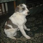 Hunde aus Italien suchen dringend Plätze!!! Ein ganzes Leben im Canile! - Seite 17 13676095lr