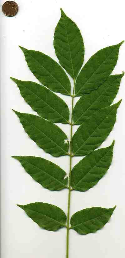 pflanze wirft immer alle gr nen bl tter ab pflanzen botanik green24 hilfe pflege bilder. Black Bedroom Furniture Sets. Home Design Ideas