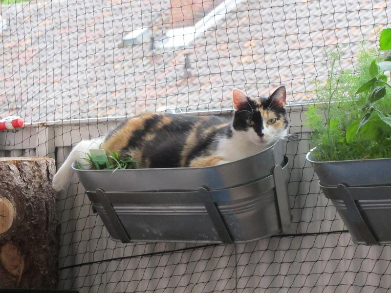 balkongestaltung: balkongestaltung mit blumen., Gartenarbeit ideen