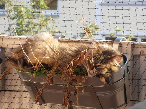 Balkongestaltung fur katzen for Ideen balkongestaltung