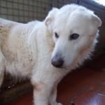 Hunde in Italien - ein ganzes Leben im Canile - Seite 2 13806159cl