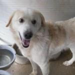 Hunde in Italien - ein ganzes Leben im Canile - Seite 2 13806160fi