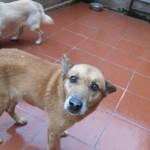 Hunde aus Italien suchen dringend Plätze!!! Ein ganzes Leben im Canile! - Seite 17 13806161is
