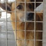 Hunde aus Italien suchen dringend Plätze!!! Ein ganzes Leben im Canile! - Seite 17 13806163xh