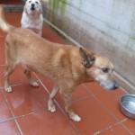 Hunde aus Italien suchen dringend Plätze!!! Ein ganzes Leben im Canile! - Seite 17 13806164cv