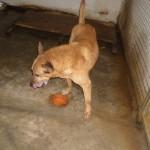 Hunde aus Italien suchen dringend Plätze!!! Ein ganzes Leben im Canile! - Seite 17 13806165bv