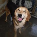 Hunde aus Italien suchen dringend Plätze!!! Ein ganzes Leben im Canile! - Seite 17 13806167ox