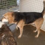 Hunde aus Italien suchen dringend Plätze!!! Ein ganzes Leben im Canile! - Seite 17 13806168wg