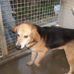Hunde aus Italien suchen dringend Plätze!!! Ein ganzes Leben im Canile! - Seite 17 13806169zs