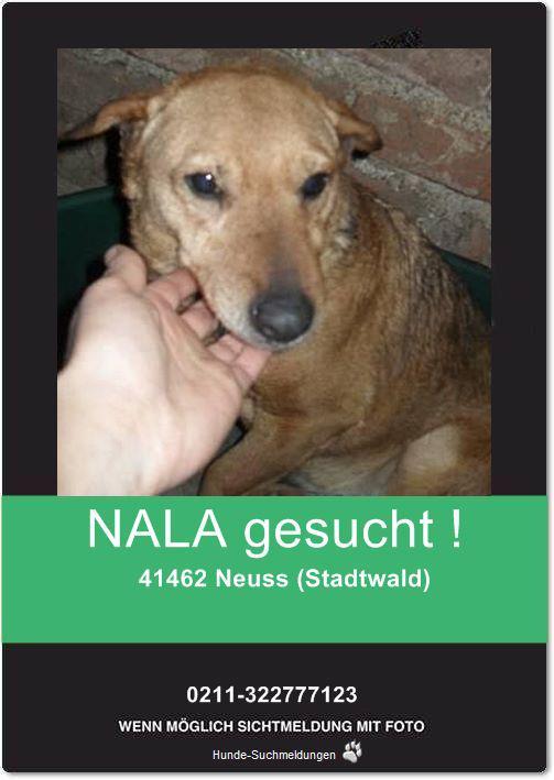 Nana, 11 Jahre, im Zuhause angekommen, entflohen und nun wieder eingefangen :-) 13811084sk