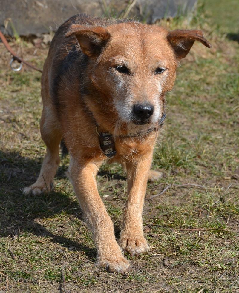 Jack - Hundeopa - Terrier - knapp 14 Jahre - Seite 2 13900608jp