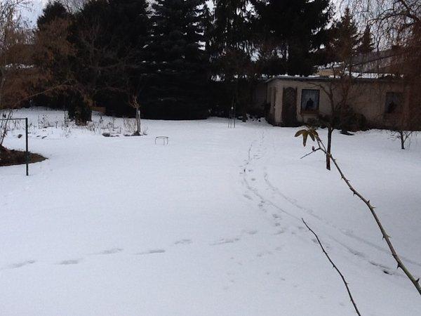 Eure Gartenbilder, Beete, Gestaltungsideen Winter/ FRÜHLING 2013 ...