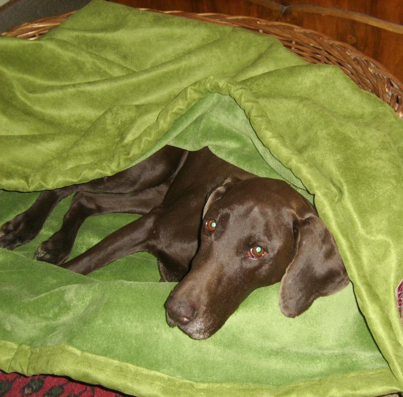 jagdhundehalter thema anzeigen warme decken f r frierende hunde. Black Bedroom Furniture Sets. Home Design Ideas