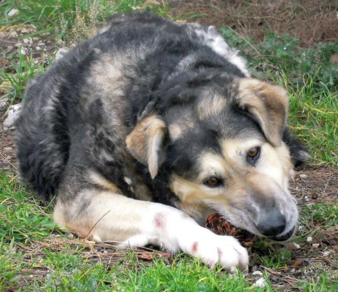 Hunde, die in Italien keine Zukunft haben 14023077ce