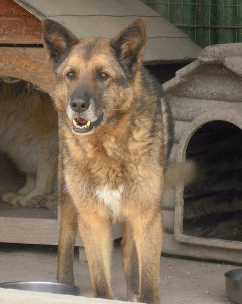 Hunde, die in Italien keine Zukunft haben 14023078jj