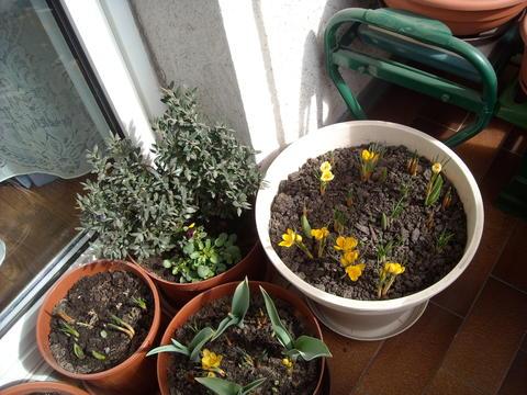 welche winterharten k bel pflanzen auf den balkon mein sch ner garten forum. Black Bedroom Furniture Sets. Home Design Ideas