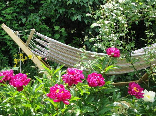 plaudereien ber zimmerpflanzen und andere sch ne dinge des lebens page 17 mein sch ner. Black Bedroom Furniture Sets. Home Design Ideas