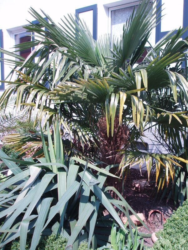 bildergalerie ein paar bilder von mir. Black Bedroom Furniture Sets. Home Design Ideas