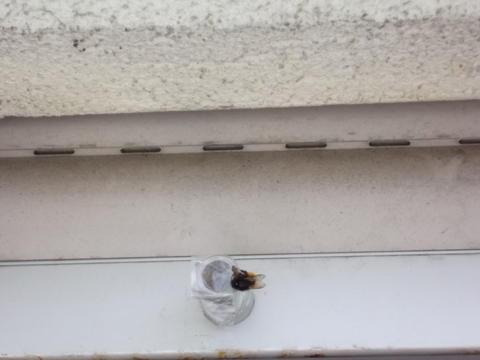 hummelnest auf dem balkon was tun cattalk das katzen. Black Bedroom Furniture Sets. Home Design Ideas