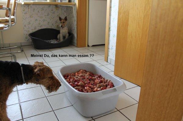 http://up.picr.de/14243955ia.jpg