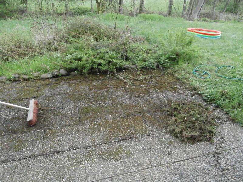 Gartenneuling Ubernimmt Verwilderten Garten Mein Schoner Garten Forum