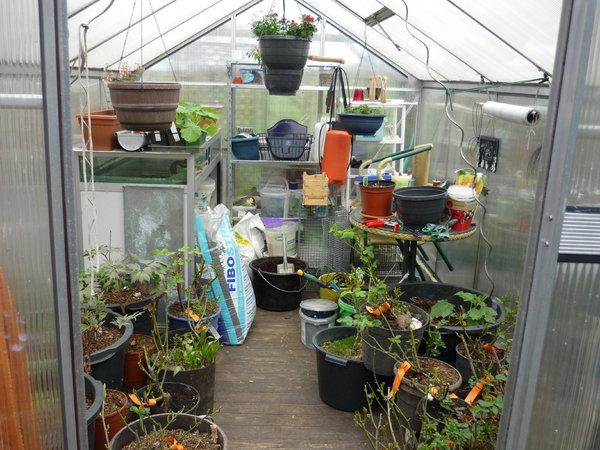 plaudereien ber zimmerpflanzen und andere sch ne dinge. Black Bedroom Furniture Sets. Home Design Ideas