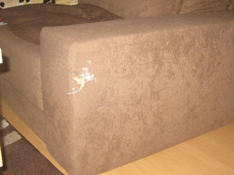 Katzenfreundliches Sofa Gesucht Seite 3 Katzen Forum