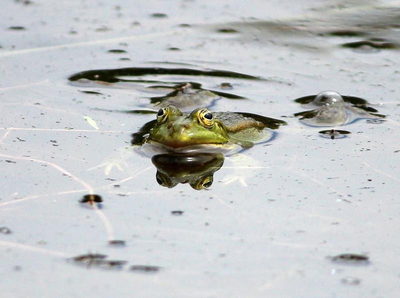 Nicht jeder Frosch ist ein Prinz 14911216sf