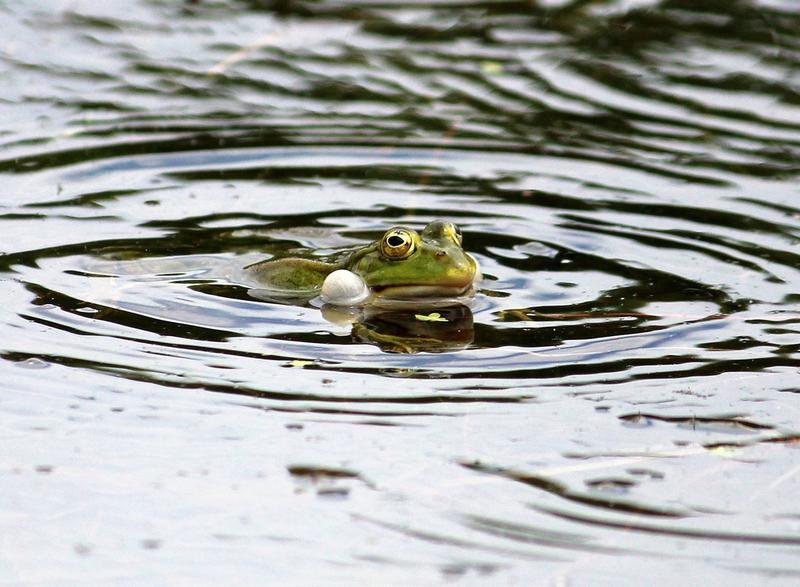 Nicht jeder Frosch ist ein Prinz 14911217db