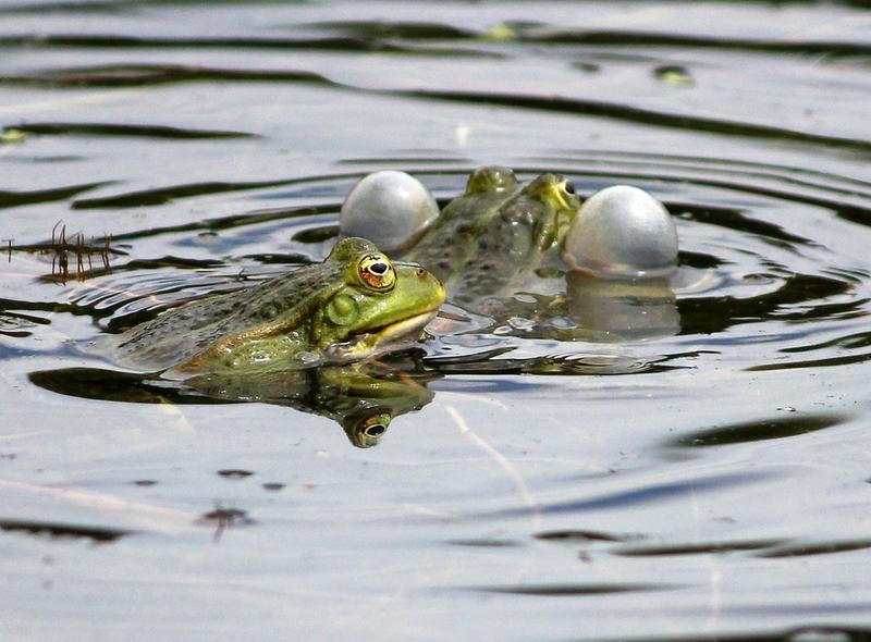 Nicht jeder Frosch ist ein Prinz 14911218yp
