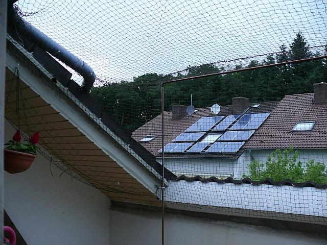 katzen forum balkon sicherung sichtschutz oder netz. Black Bedroom Furniture Sets. Home Design Ideas