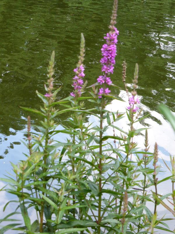 Pflanzen Im Garten Bestimmen – Reimplica | juliedeane.info