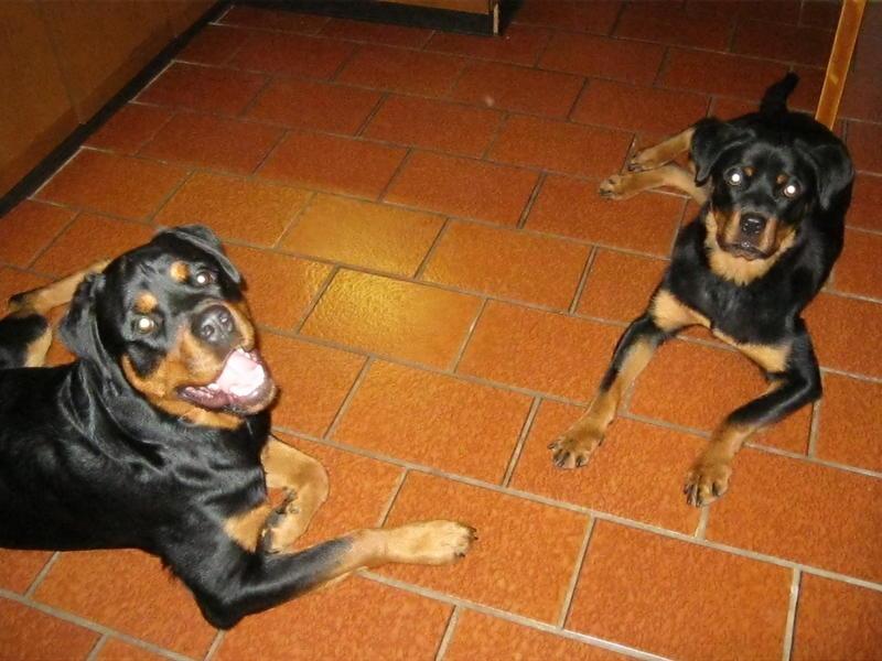 Bruna nun Bella ist in ihrem Zuhause angekommen 15080960tr