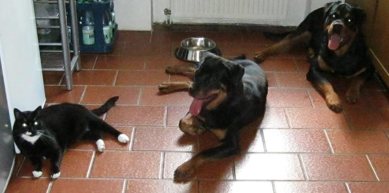Bruna nun Bella ist in ihrem Zuhause angekommen 15107936vk