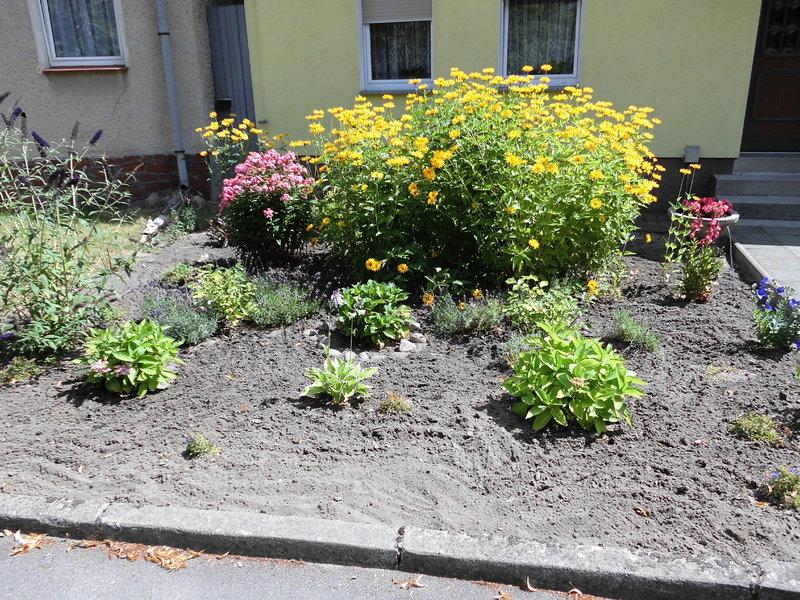 vorgarten neu gestalten - aber wie? - seite 1 - gartengestaltung, Garten und Bauen