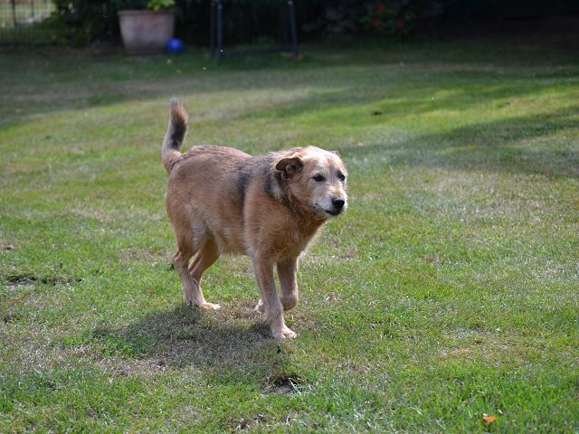Jack - Hundeopa - Terrier - knapp 14 Jahre - Seite 2 15380550zc