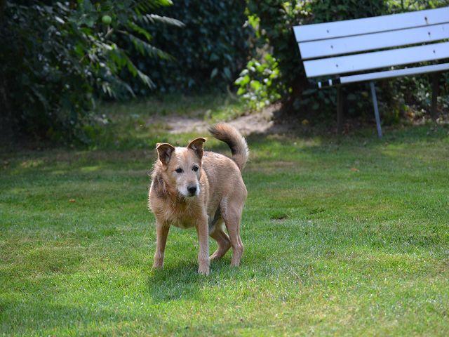 Jack - Hundeopa - Terrier - knapp 14 Jahre - Seite 2 15380552ny