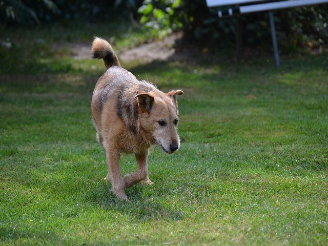Jack - Hundeopa - Terrier - knapp 14 Jahre - Seite 2 15380553ju
