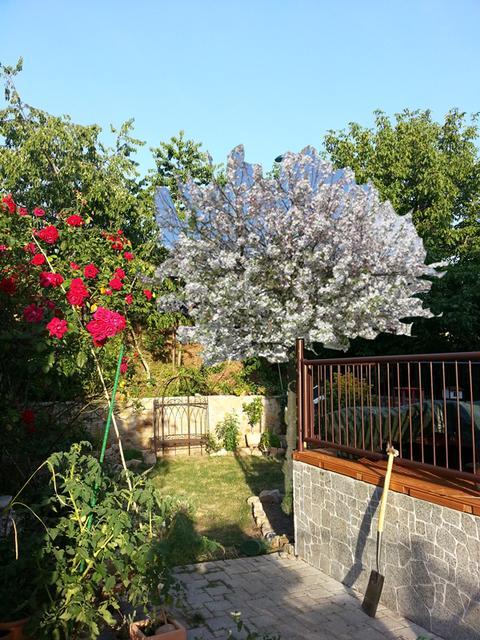 neue beete farben und pflanzen im garten page 3 mein sch ner garten forum. Black Bedroom Furniture Sets. Home Design Ideas