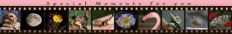Fotografien von Pflanzen, Insekten, diversen anderen Tieren und andere interessante Aufnahmen