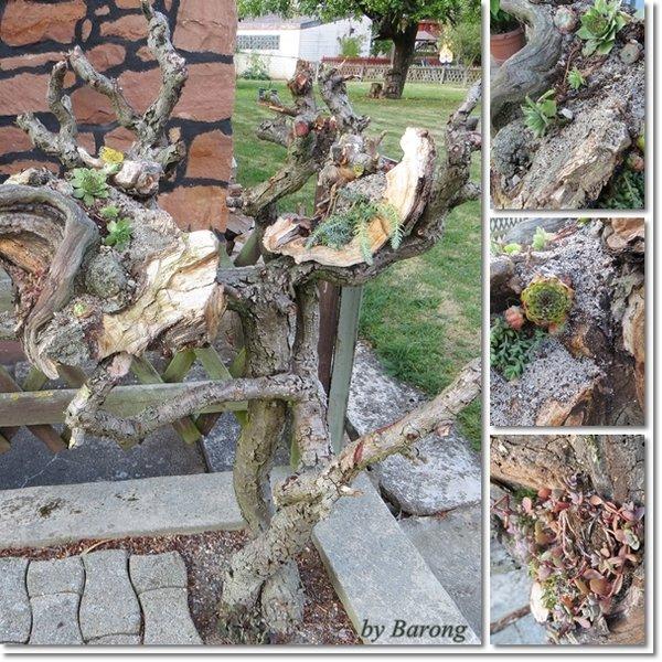 dachwurz dekorieren | actof, Garten seite