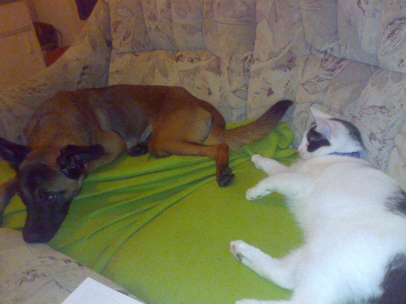 hunde aneinander gewöhnen